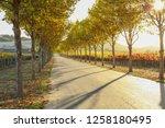 fall foliage  autumn landscape... | Shutterstock . vector #1258180495