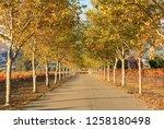 fall foliage  autumn landscape... | Shutterstock . vector #1258180498