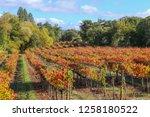fall foliage  autumn landscape... | Shutterstock . vector #1258180522