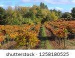 fall foliage  autumn landscape... | Shutterstock . vector #1258180525