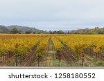 fall foliage  autumn landscape... | Shutterstock . vector #1258180552
