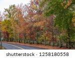 fall foliage  autumn landscape... | Shutterstock . vector #1258180558