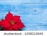 red christmas flower poinsettia ... | Shutterstock . vector #1258213045