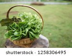 red oak green oak iceberg... | Shutterstock . vector #1258306495