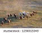 bashang of inner mongolia horse ... | Shutterstock . vector #1258315345