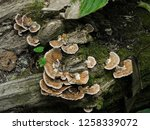 mushrooms in the forest | Shutterstock . vector #1258339072