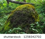 large anthill in the forest.  | Shutterstock . vector #1258342702