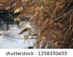 nile river near aswan  egypt   Shutterstock . vector #1258350655