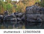 nile river near aswan  egypt   Shutterstock . vector #1258350658