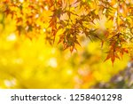 beautiful red and green maple... | Shutterstock . vector #1258401298