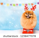 funny dog with  hristmas... | Shutterstock . vector #1258477078