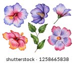 watercolor set of flowers ... | Shutterstock . vector #1258665838