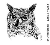 owl graphic on a white... | Shutterstock . vector #1258674265