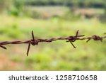 rusty barbed wire on green... | Shutterstock . vector #1258710658