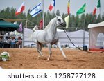 the arabian horse | Shutterstock . vector #1258727128