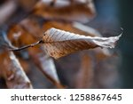 leaves during the autumn season | Shutterstock . vector #1258867645