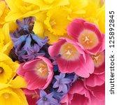 Tulip  Daffodil And Hyacinth...