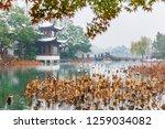 hangzhou china 9 december  2018 ... | Shutterstock . vector #1259034082