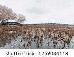 hangzhou china 9 december  2018 ... | Shutterstock . vector #1259034118