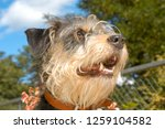dog at the animal shelter of... | Shutterstock . vector #1259104582