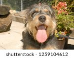dog at the animal shelter of... | Shutterstock . vector #1259104612