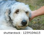 dog at the animal shelter of... | Shutterstock . vector #1259104615
