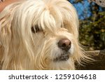 dog at the animal shelter of... | Shutterstock . vector #1259104618