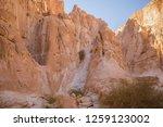 wadi watir  sinai   egypt   may ... | Shutterstock . vector #1259123002