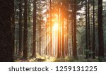 silent forest in spring with... | Shutterstock . vector #1259131225