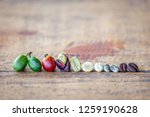 the different stages of coffee... | Shutterstock . vector #1259190628
