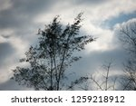overcast cloudy in the morning. | Shutterstock . vector #1259218912