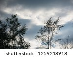 overcast cloudy in the morning. | Shutterstock . vector #1259218918