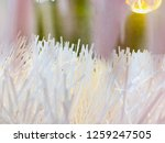 blurry christmas decorations | Shutterstock . vector #1259247505