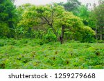 green tree and environment on... | Shutterstock . vector #1259279668