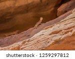 wadi watir  sinai   egypt   may ... | Shutterstock . vector #1259297812