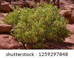 wadi watir  sinai   egypt   may ... | Shutterstock . vector #1259297848