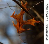 isolated leaf during the autumn ... | Shutterstock . vector #1259374522