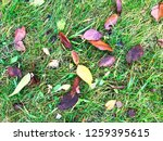 natural garden texture with... | Shutterstock . vector #1259395615