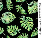 green tropical monstera leaves... | Shutterstock . vector #1259398288