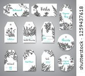 hand drawn herbs and wild... | Shutterstock . vector #1259437618