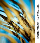 Detail Of A Reed Plant Against...