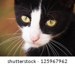Stock photo young cat black and white close up 125967962
