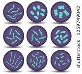 flat vector microbiology set.... | Shutterstock .eps vector #1259749042