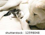 Stock photo animals 12598048
