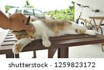 touch a sleeping cat lying on... | Shutterstock . vector #1259823172