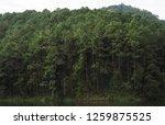 natural rain forest | Shutterstock . vector #1259875525