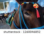 santorini donkey   symbol of... | Shutterstock . vector #1260046852