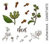 hand drawn cloves herb.... | Shutterstock .eps vector #1260071872