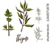 detailed retro image of thyme.... | Shutterstock .eps vector #1260071878