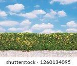 yellow spike flower in ... | Shutterstock . vector #1260134095